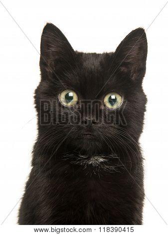 Cute black kitten cat portrait