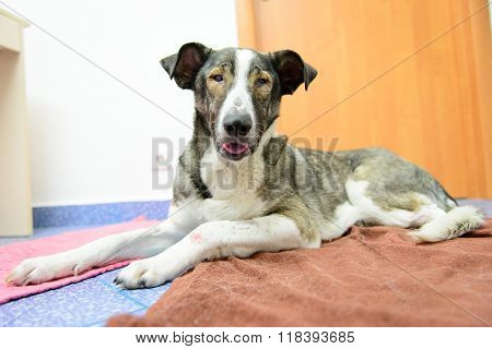 Dog With Amputated Paw