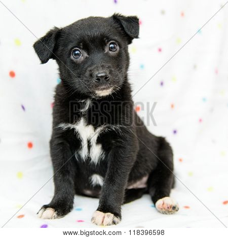 Little Black Puppy