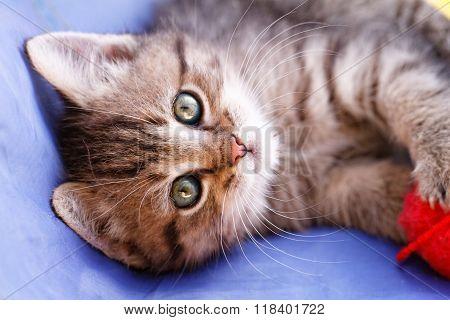 Cute Small Cat