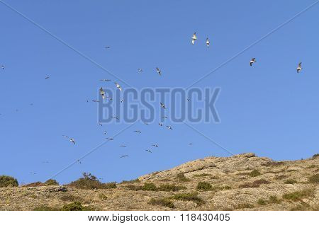 Gulls  In A Blue Sky Over The Top Of The Mountain.