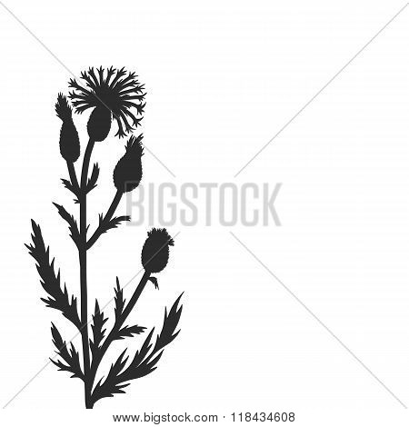 floral composition with cornflower plant