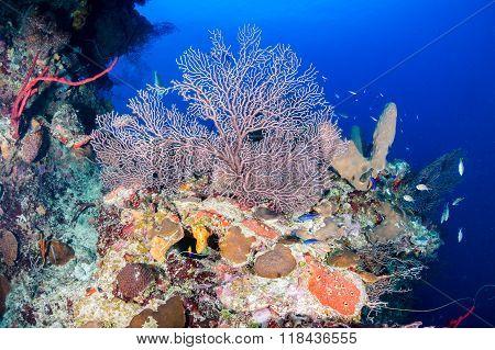 Deep water coral reef