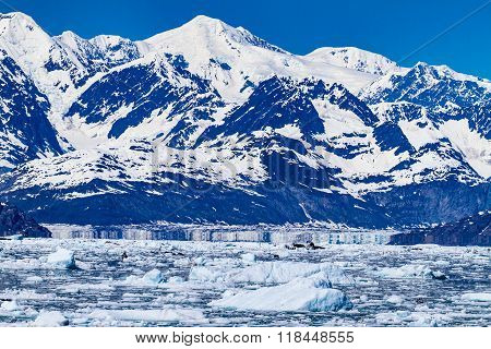Columbia Glacier And Icebergs