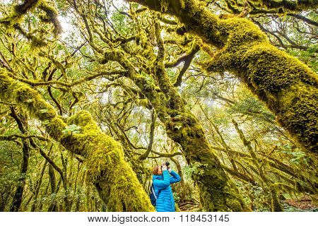 Woman traveling evergreen forest