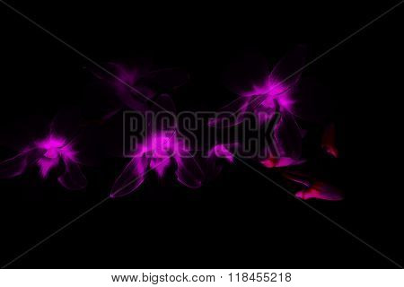 Beauty Purple Dendrobium Orchid, Abstract Flower Background