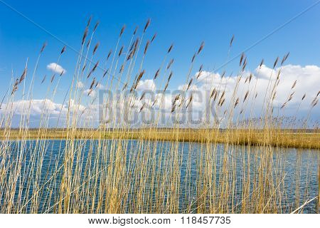 Lake Through The Reeds On The Background Of Sky