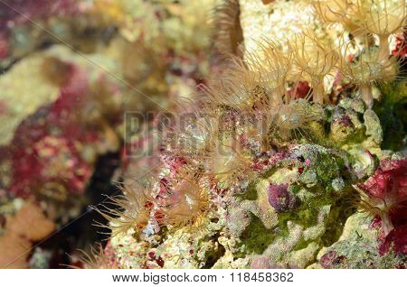 Sea anemones in a natural looking marine aquarium. Coral reef view.