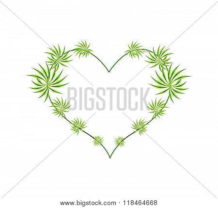 Fresh Dracaena Leaves In A Heart Shape