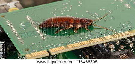 big  cockroach on the  computer microcircuits. Concept of computer  bugs and virus