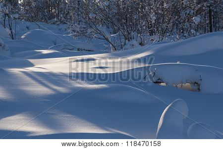 Snowdrifts In Winter Forest
