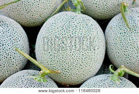 Cantaloupe Melon Close Up