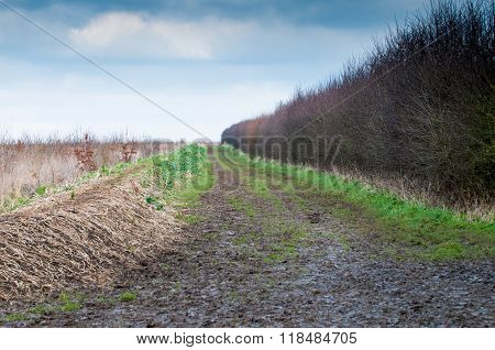 Muddy Country Road