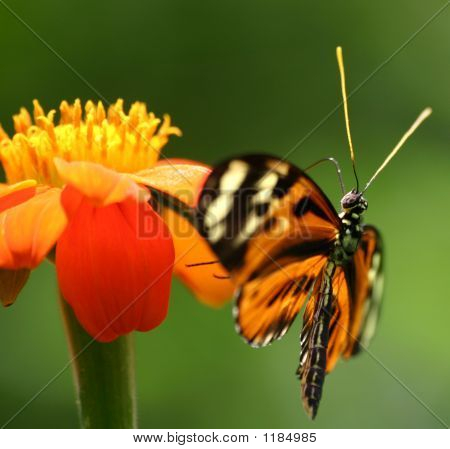 Pretty Butterfly