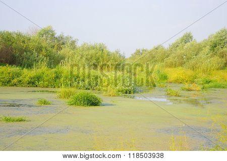 Swamp At Sunny Day.