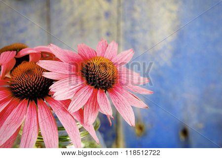 Echinacea Flowers In Glass Jar