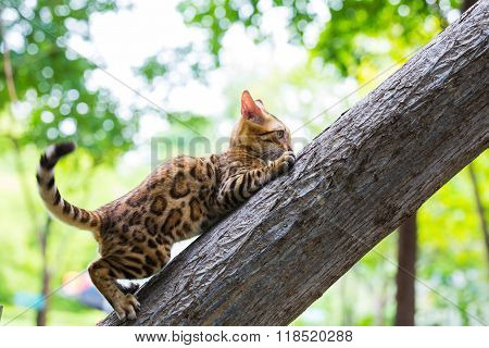 A marble cat walking outdoors on tree