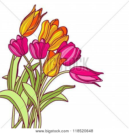 Bouquet Of Hand Drawn Pink And Yellow Tulip Flowers, Isolated On White Background.