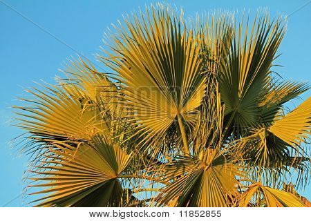 Palm Fronds And Blue Sky