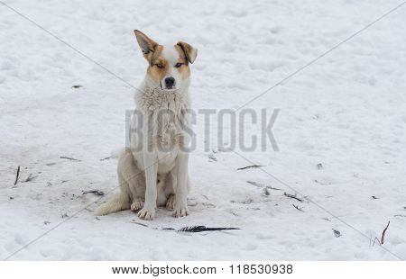 Outdoor portrait of cute street dog sitting on a snow