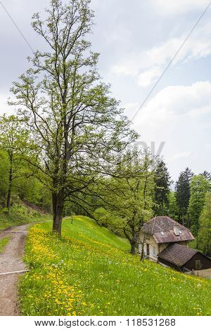 Schlossberg Park In Freiburg Im Breisgau City, Germany
