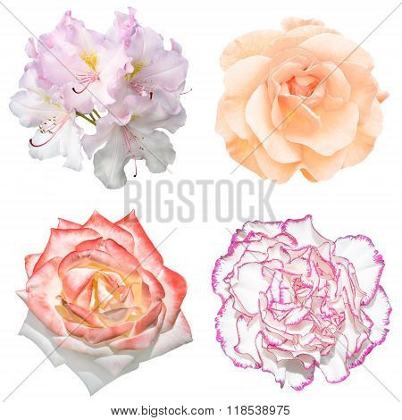 Set Of 4 In 1 Tender Soft Color Flowers: Pelargonium, Roses And Clove Flower Isolated On White