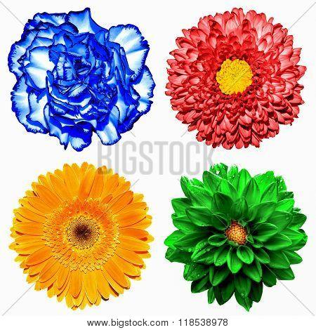 Set Of 4 In 1 Flowers: Red Chrysanthemum, Orange Gerbera, Blue Clove And Red Chrysanthemum Flower Is