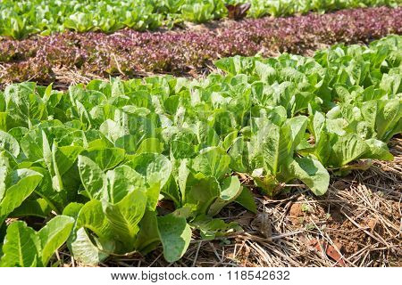 Organic Hydroponic Vegetable Cultivation Farm At Countryside