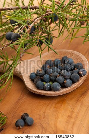 Branch Of Conifers Junipers And Wooden Spoon Ful Of Blue Berries And Twig Of Rosemary.