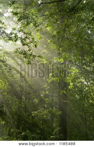 Sun Rays Shine Through Branches And Green Leaves