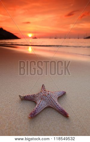 Starfish on the beach and beautiful sunset over the sea background