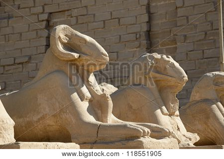 Sphinxes - Luxor