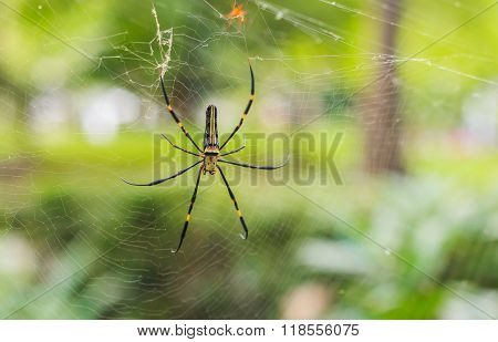 The Spider On Spiderwebs Waiting For Victims With Selective Focus