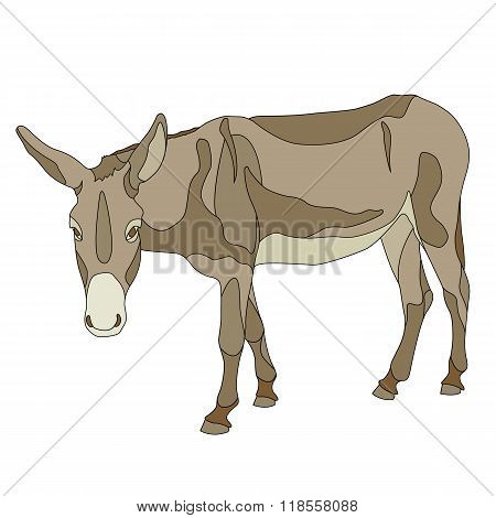 Donkey outline color isolated