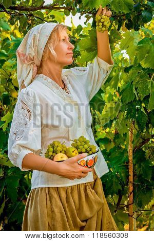 Girl collects fruit