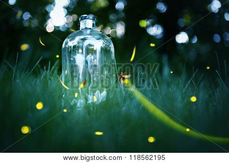Fireflies in a jar.