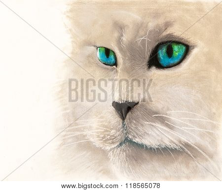 Beautiful cat on a withe background.