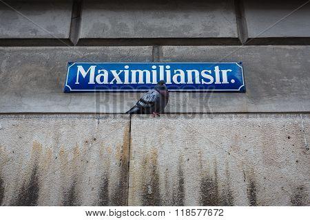 Dove Under Street Sign