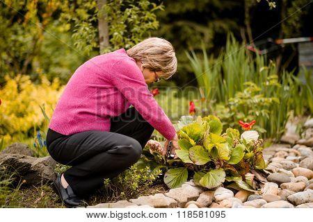 Senior woman pruning flowers