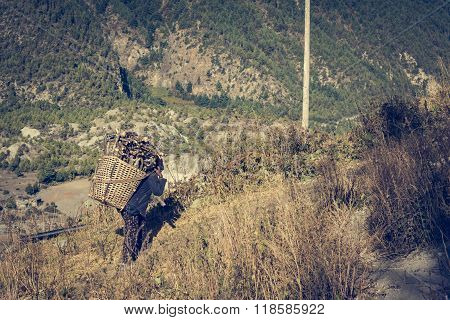 Farmer carrying firewood.