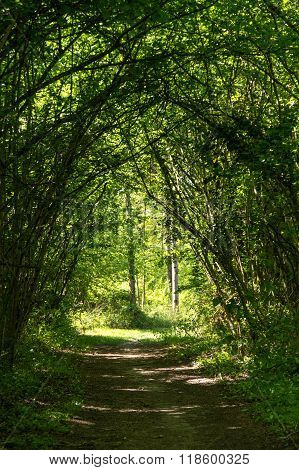 Tunnel Path In The Forest