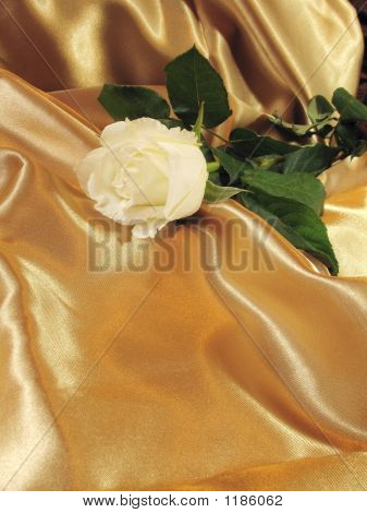 White Rose On Gold Satin