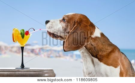 Dog With Cocktail  In Bar On A Beach