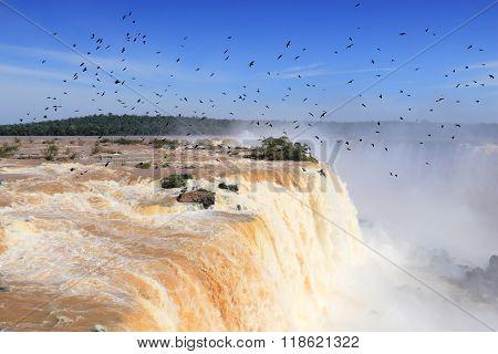 Birds Over Iguazu