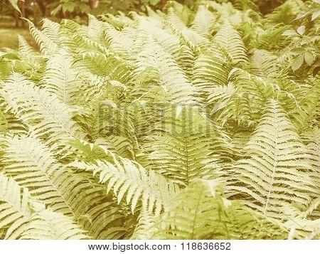 Retro Looking Ferns Leaves
