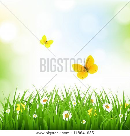Grass Border With Nature Background