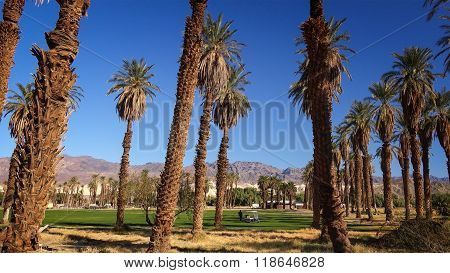 Furnace Creek Golf Course In Death Valley
