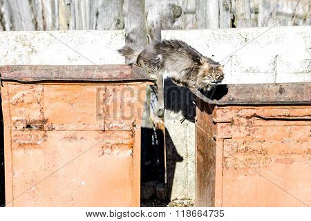 Stray Cat In The Trash