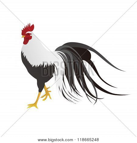 Realistic Rooster Illustration