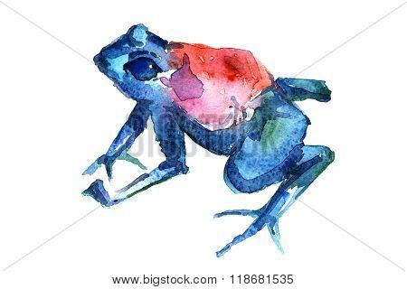 Frog Side-on Aquarelle